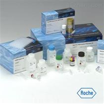 猪白介素18(IL18)ELISA试剂盒