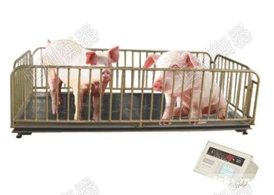 卖猪小地磅