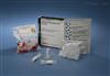 犬胆囊收缩素(CCK)elisa检测试剂盒